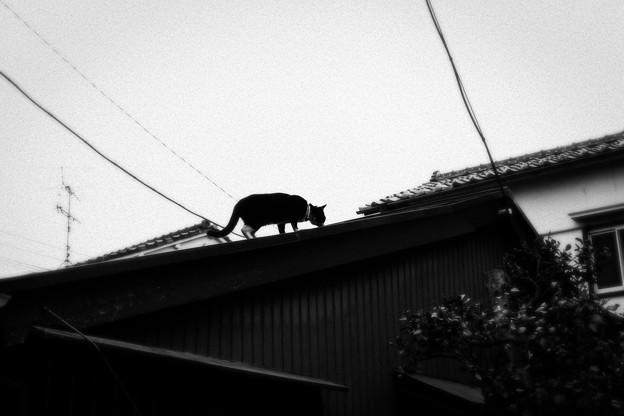 写真: 猫撮り散歩2133