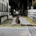 写真: 猫撮り散歩2136