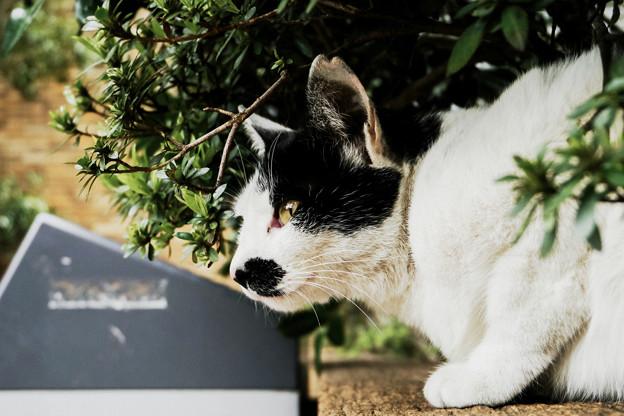 猫撮り散歩2137