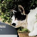 写真: 猫撮り散歩2137