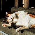 写真: 猫撮り散歩2139