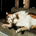 Photos: 猫撮り散歩2139
