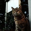 猫撮り散歩2144