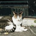 猫撮り散歩2147