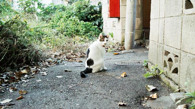 写真: 猫撮り散歩2153