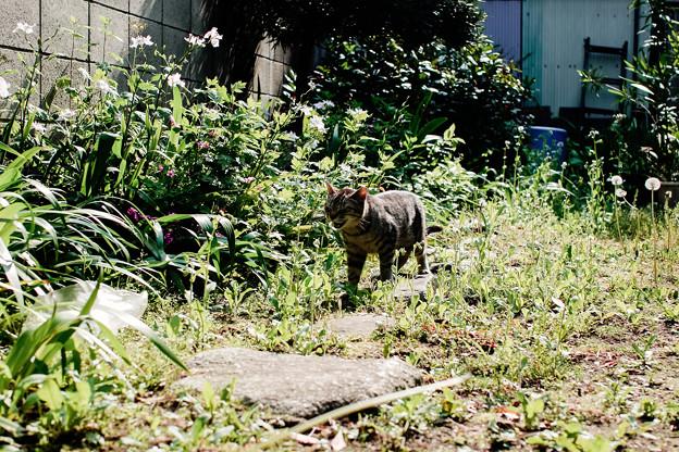 猫撮り散歩2154