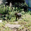 写真: 猫撮り散歩2154