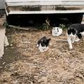 写真: 猫撮り散歩2156