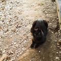 猫撮り散歩2159