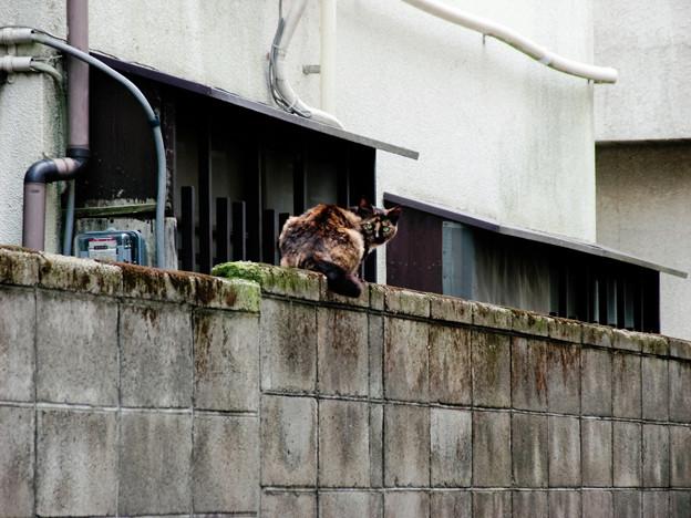 猫撮り散歩2160