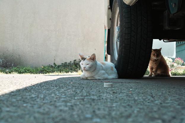 猫撮り散歩2162