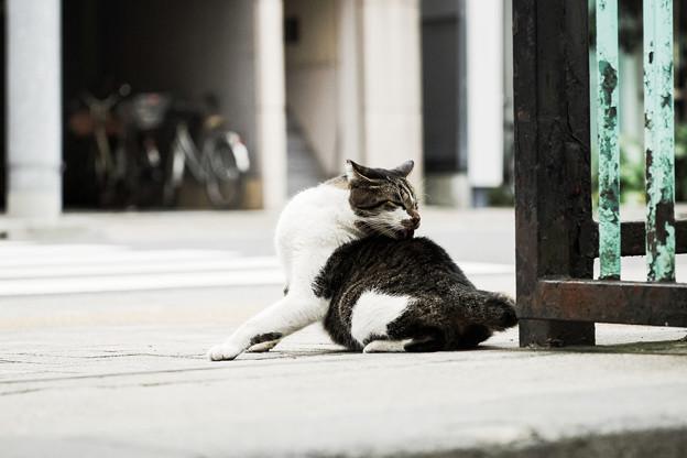 猫撮り散歩2164