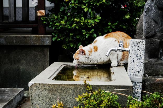 猫撮り散歩2166