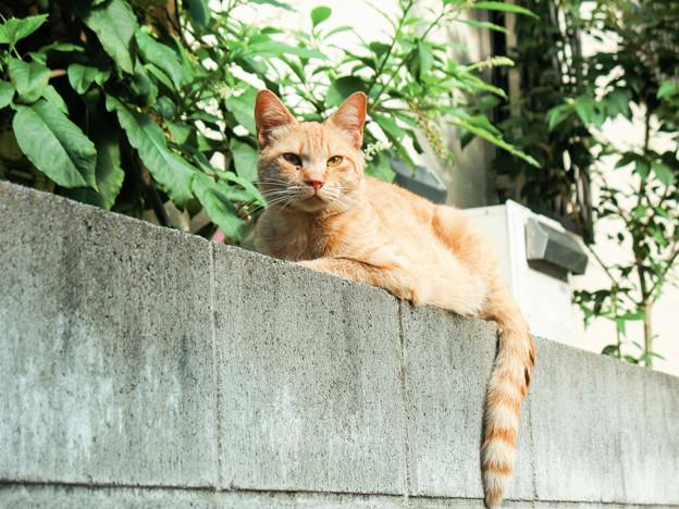 猫撮り散歩2170