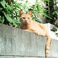 写真: 猫撮り散歩2170