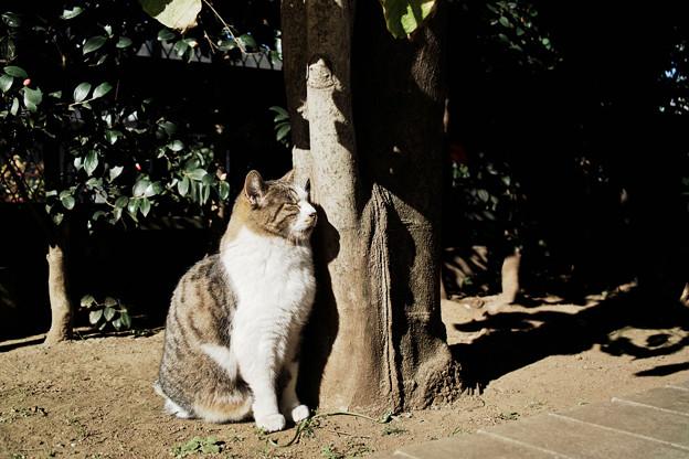 猫撮り散歩2171