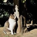 写真: 猫撮り散歩2171