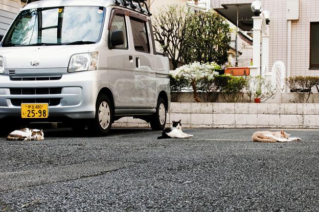 猫撮り散歩2173
