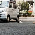 写真: 猫撮り散歩2173
