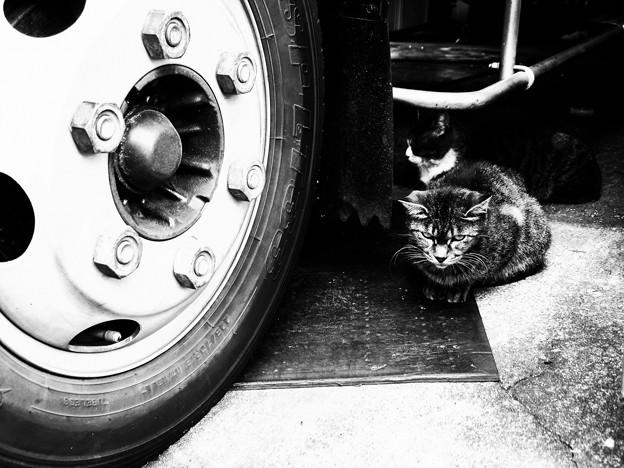 写真: 猫撮り散歩2175