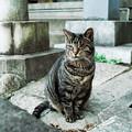 写真: 猫撮り散歩2177