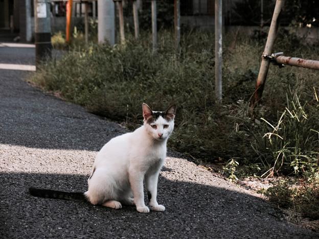 猫撮り散歩2179