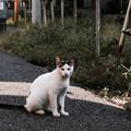 写真: 猫撮り散歩2179