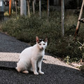 Photos: 猫撮り散歩2179