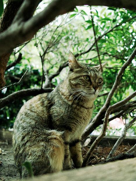 猫撮り散歩2180