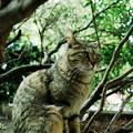 写真: 猫撮り散歩2180