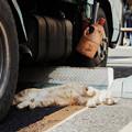 写真: 猫撮り散歩2182