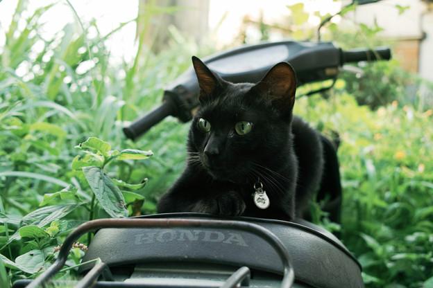猫撮り散歩2183