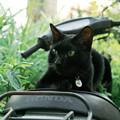 写真: 猫撮り散歩2183