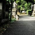 写真: 猫撮り散歩2184