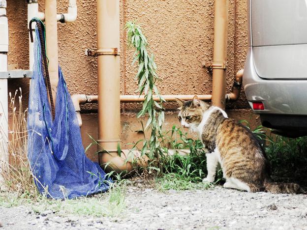 猫撮り散歩2185