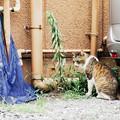 写真: 猫撮り散歩2185