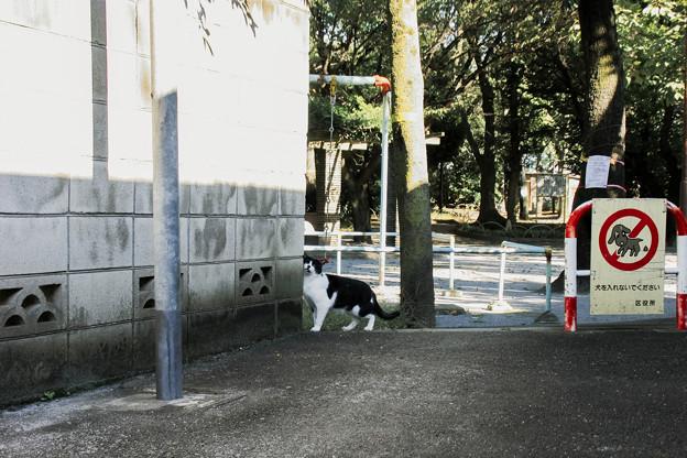 写真: 猫撮り散歩2187