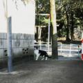 猫撮り散歩2187