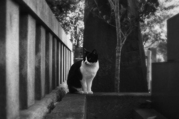 猫撮り散歩2192