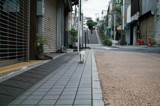 猫撮り散歩2195