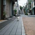 写真: 猫撮り散歩2195