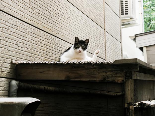 猫撮り散歩2196