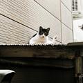 写真: 猫撮り散歩2196