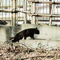 写真: 猫撮り散歩2200