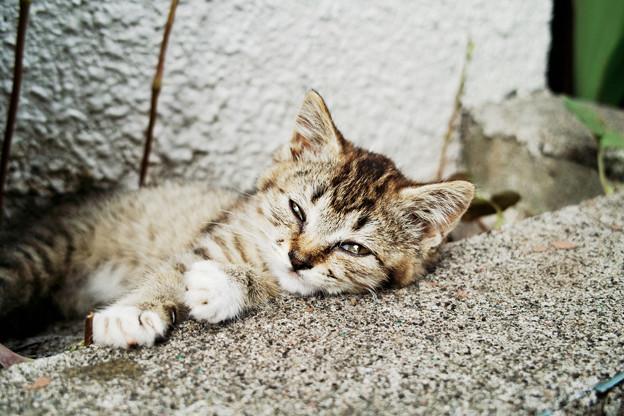 猫撮り散歩2201