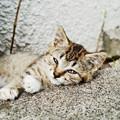 写真: 猫撮り散歩2201