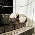 写真: 猫撮り散歩2202