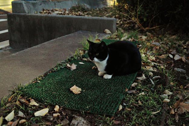 写真: 猫撮り散歩2204