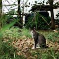 写真: 猫撮り散歩2207