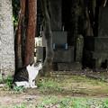 写真: 猫撮り散歩2211